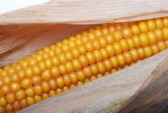 dojrzały kukurydzany ucho Obrazy Stock