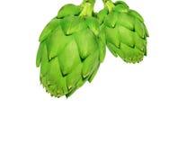 Dojrzały zielony karczocha warzywo Obrazy Stock
