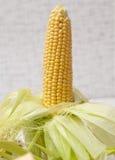 dojrzała cob kukurudza Obrazy Royalty Free