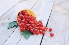 Dojrzali świezi czerwoni rodzynki w lody gofrze konusują na nieociosanym drewnianym tle fotografia stock