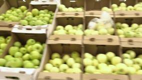 Dojrzali świezi zieleni jabłka na sprzedaży przy targowymi shelfs mnóstwo jabłka kłamają w rozsypisku w kartonie na kontuarze zbiory