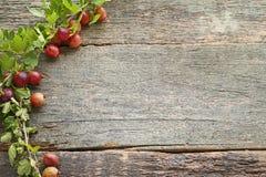 Dojrzali agresty owocowi Zdjęcia Stock