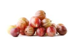 Dojrzali agresty owocowi Obrazy Royalty Free