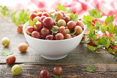 Dojrzali agresty owocowi Zdjęcie Stock