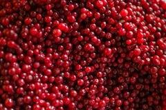 Dojrzali cranberries dla tła Obraz Royalty Free