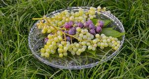 Dojrzali czerwoni i biali winogrona Zdjęcia Royalty Free