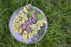 Dojrzali czerwoni i biali winogrona Obrazy Stock