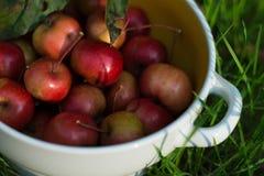 Dojrzali czerwoni mali jabłka w talerzu Obraz Royalty Free