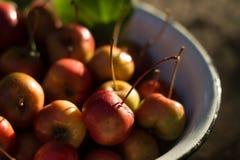 Dojrzali czerwoni mali jabłka w talerzu Zdjęcia Royalty Free