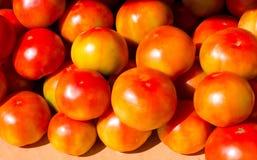 Dojrzali czerwoni pomidory doskonalić warzywa Fotografia Royalty Free