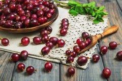 Dojrzali czerwoni purpurowi jagodowi agresty Obrazy Royalty Free