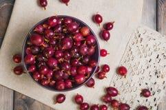 Dojrzali czerwoni purpurowi jagodowi agresty Zdjęcie Royalty Free