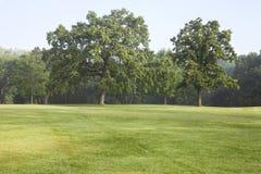 Dojrzali dębowi drzewa i trawa w parku na mglistym lato ranku Zdjęcia Stock