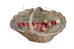 Dojrzali jabłka w koszykowym zakończeniu Zdjęcie Stock