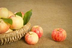 Dojrzali jabłka w pięknym łozinowym koszu Zdjęcia Stock