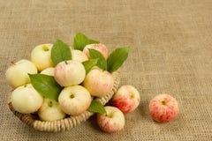 Dojrzali jabłka w pięknym łozinowym koszu Zdjęcie Stock