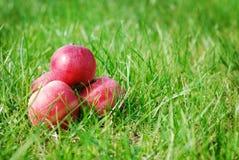 Dojrzali jabłka Obraz Stock