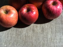 Dojrzali jabłka na brezentowym tle, odgórny widok Obrazy Royalty Free