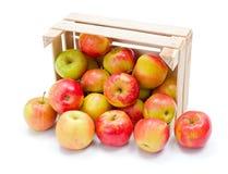 Dojrzali jabłka w drewnianej skrzynce Zdjęcia Royalty Free