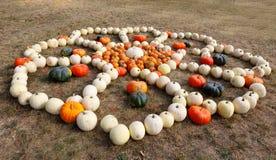 Dojrzali jesieni bani ornamenty na gospodarstwie rolnym Zdjęcie Royalty Free