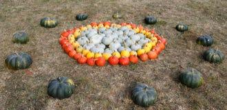 Dojrzali jesieni bani ornamenty na gospodarstwie rolnym Obrazy Royalty Free