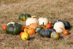 Dojrzali jesieni bani ornamenty na gospodarstwie rolnym Obraz Royalty Free