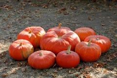 Dojrzali jesieni bani ornamenty na gospodarstwie rolnym Fotografia Stock