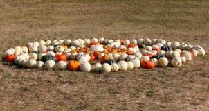 Dojrzali jesieni bani ornamenty na gospodarstwie rolnym Zdjęcia Stock