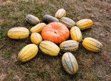 Dojrzali jesieni bani ornamenty na gospodarstwie rolnym Zdjęcie Stock