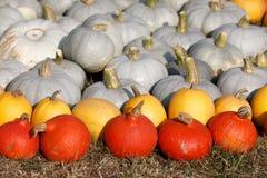 Dojrzali jesieni bani ornamenty na gospodarstwie rolnym Obraz Stock