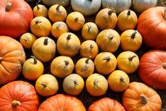 Dojrzali jesieni bani ornamenty na gospodarstwie rolnym Zdjęcia Royalty Free