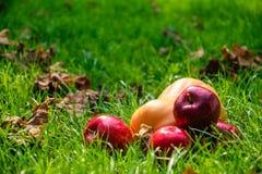 Dojrzali jesieni jabłka i żółta bania Sceneria dla Halloween zdjęcia stock