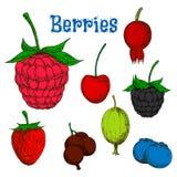 Dojrzali kolorowi jagodowych owoc nakreślenia Obraz Royalty Free
