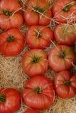 Dojrzali pomidory zdjęcia stock