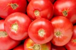 Dojrzali pomidory Fotografia Royalty Free