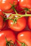 Dojrzali pomidory z wodnym kropli zakończeniem Zdjęcie Stock