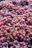 Dojrzali purpurowi winogrona Obrazy Royalty Free