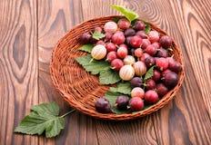 Dojrzali, smakowici agresty z zielonymi liśćmi w jasnobrązowej skrzynce na drewnianym tle, Kosz pełno soczyste jagody Fotografia Royalty Free