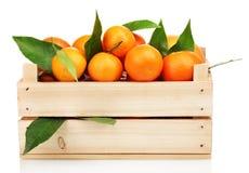 Dojrzali smakowici tangerines z liść w drewnianym pudełku Zdjęcia Royalty Free