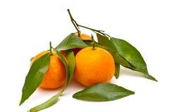 dojrzali tangerines Obrazy Royalty Free