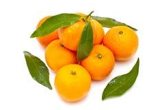 dojrzali tangerines Obrazy Stock