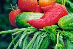 Dojrzali Warzywa zdjęcie stock