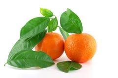 Dojrzali świezi mandarines Fotografia Royalty Free