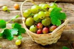 Dojrzali, świezi, organicznie agresty, Zdjęcie Stock
