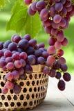 Dojrzali winogrona Obraz Royalty Free