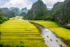 Dojrzewa ryżowych paski z obu stron strumienia wśrodku Tama Coc Naturalnej rezerwy, Ninh Binh pro , Wietnam Obrazy Stock