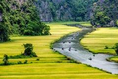 Dojrzewa ryżowych paski z obu stron strumienia wśrodku Tama Coc Naturalnej rezerwy, Ninh Binh pro , Wietnam Obraz Stock