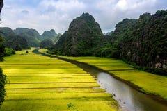 Dojrzewa ryżowych paski z obu stron strumienia wśrodku Tama Coc Naturalnej rezerwy, Ninh Binh prowincja, Wietnam Zdjęcie Stock
