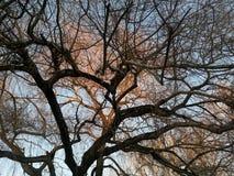 Dokąd ciemny spotyka światło Zdjęcie Royalty Free