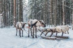 Dokąd jest Święty Mikołaj zdjęcie royalty free